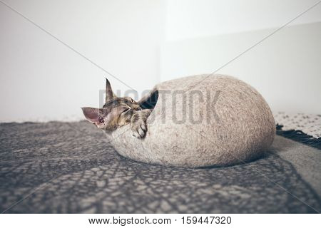 Devon Rex cat likes to sleep in soft cozy sleeping bed. Cat is sleeping in comfortable cat cave made of wool - simple, minimal handmade design. Happy chilling cat. Scandinavian style, natural colors