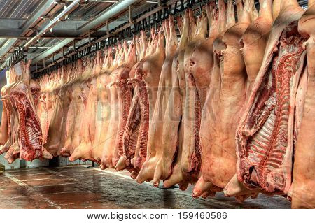 Pork carcasses rest in hooks hanging from the ceiling at warehouse.