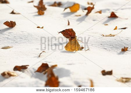 Close up view of snow and fallen leaves