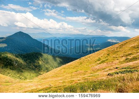 Yellow Hills With Trees And Sunlight Spots