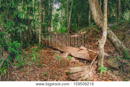 Walking trail with a fallen tree in Thai dark tropical forest, Mu Koh Chang National Park, Chang island, Thailand. Natural background. Soft Focus.