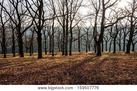 landscape. autumn. oak trees with fallen leaves in the mountains at sunset background