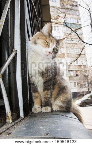 Spring beautiful cat sitting outside on the windowsill.