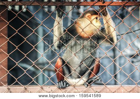 a monkey behind fence in cage at zoo