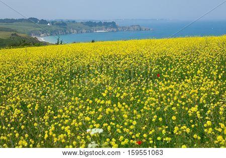 Beautiful Rural Landscape Of Belle-ile-en-mer In Brittany, France
