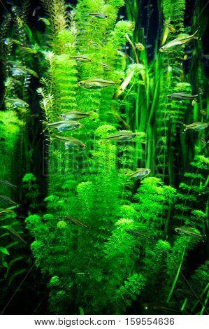 some green algae in dark water waving around