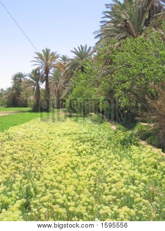 Flowers And Tress Of A Palm Grove In An Oasis, Tinerhir, Morocco