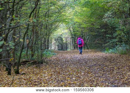 Taken on a visit to Hainault Forest on a November day. Lady with pink coat walking on country path in the forest.