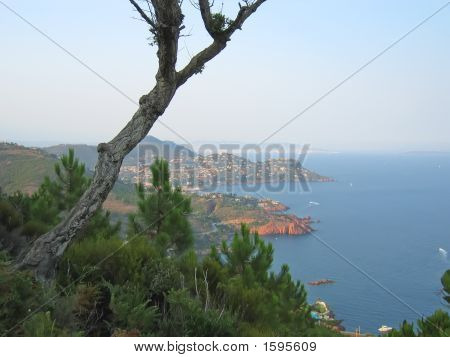 Provencal Coast With A Pine Tree On The Foreground, Esterel Cap, Azur Coast, South Of France