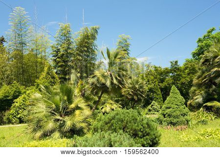 Beautiful Spring Tropical Garden Or Forest Woods. Nobody. Summer Nature Landscape. Environment Concept.