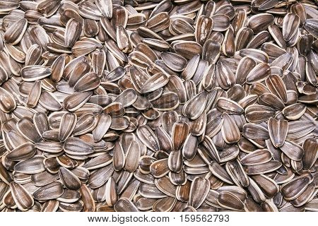 sunflower seeds background texture. Background from seeds of sunflower