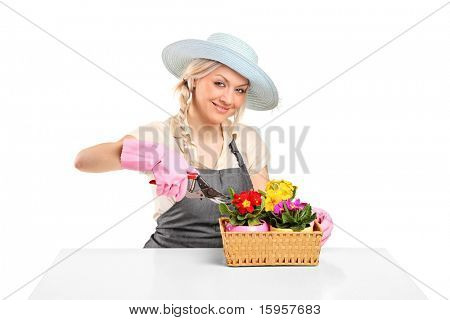 Woman cutting flowers with pruning shears on white background