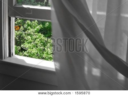 Butterfly With Blowing Curtains