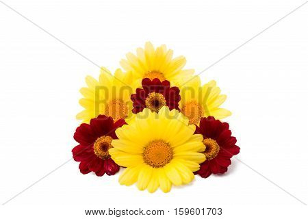 yellow daisies flower on a white background