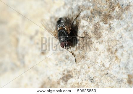 A macro shot of a fly on the wall