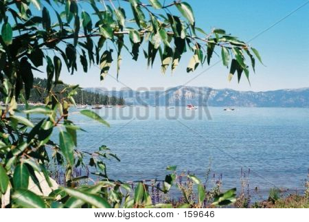 Lake Tahoe, Nevada, Framed By Tree Limbs