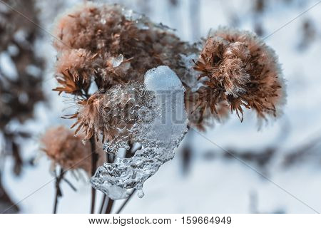snow winter nature lake water leaf stream landscape morning