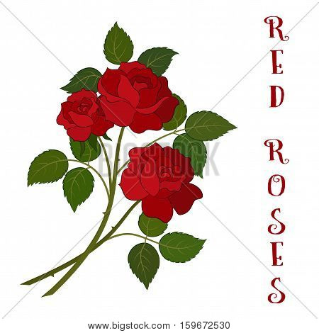 Roses Bouquet, Three Beautiful Red Flowers with Green Leaves, Floral Gift, Love Symbol for Your Holiday Design. Vector