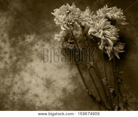 Codolence card with dry flowers on dark background