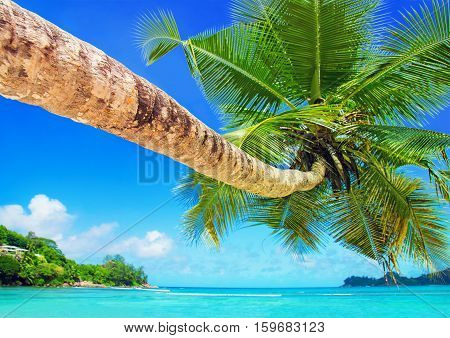 Perfect tropical coconut palm beach Baie Lazare one of the most beautiful beaches in the world Mahe island Seychelles gem of the Indian Ocean shore