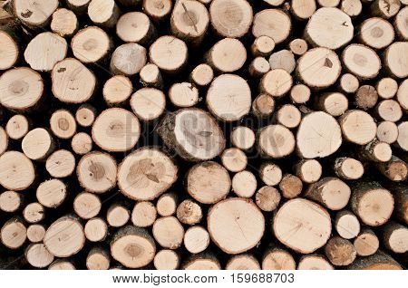 Stacked logs of oak tree for making a fire