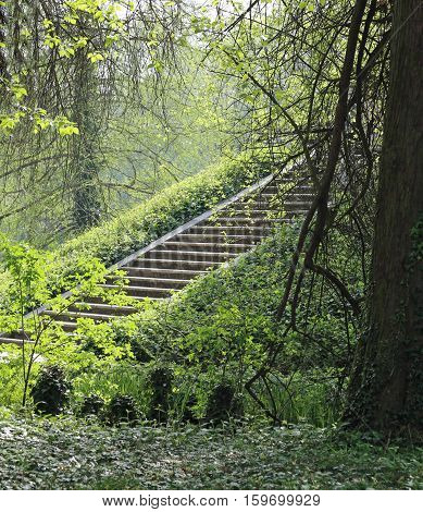 Ancient Stone Stairway In The Forest