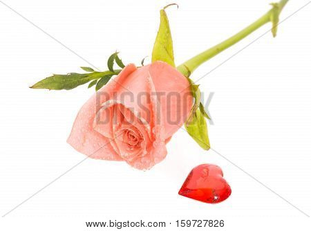 Rose with drops of water and heart nearby. A pink rose with dew drops on a white background. Near a rose red heart from glass