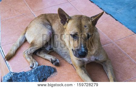sad dog brown alone street abandoned eyes