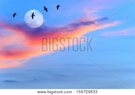 Birds silhouettes sunset moon is four large birds flying by the light of the moon.