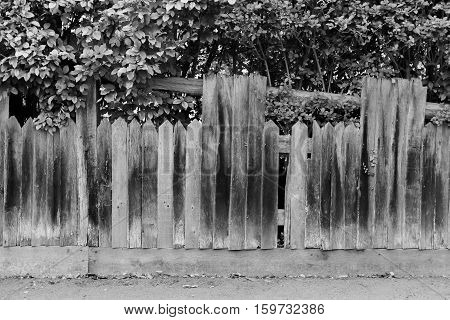 Shabby broken old wooden fence with holes and fallen planks