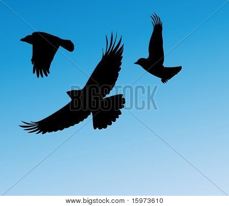 birds in flight two vector