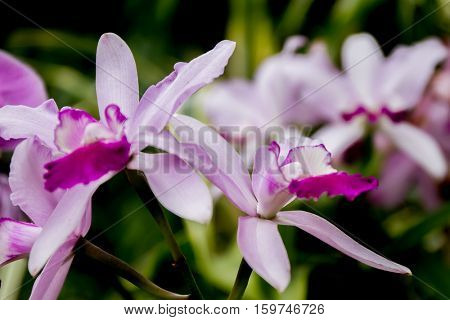 orchid flowers on natural background