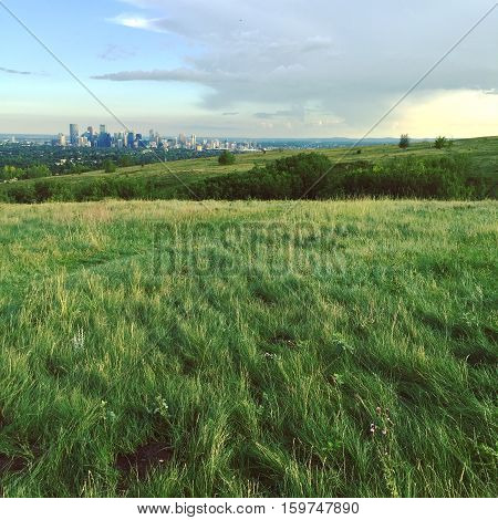 Summer field landscape.  Field with hills, isolated trees, bright lush green grass and trail through grass. Bright blue sky and large dark cloud at sunset with Calgary downtown buildings in background.