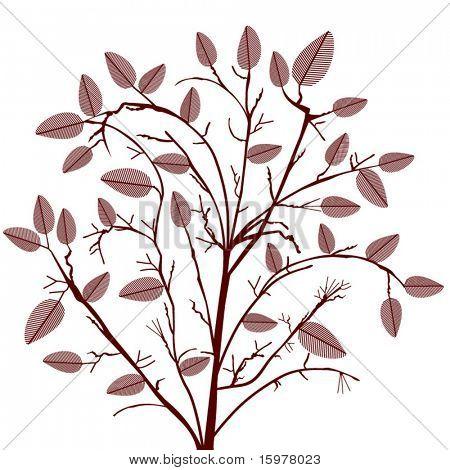 shrub - tree with leaves