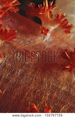 Many-host Goby fish on soft coral