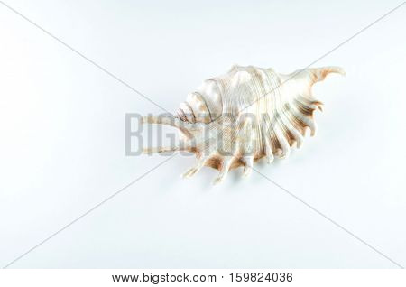 Sea shell on a white background is a Studio nautical objects