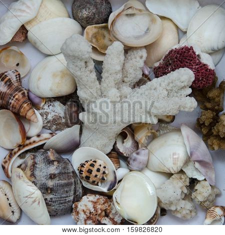 Square Flat Lay photo of corals and seashells