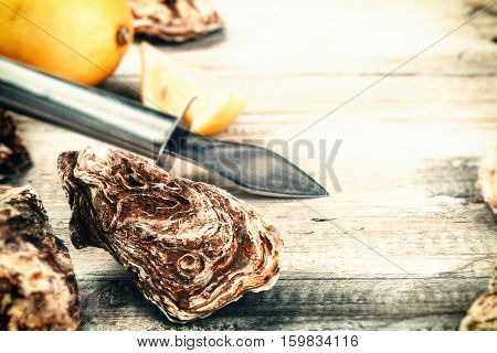 Fresh oysters with fresh lemon. Food background