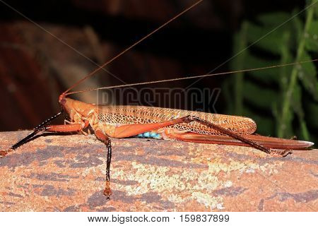 Locust on a Log. Forest in West Papua Indonesia