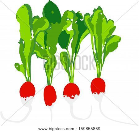 Scalable vectorial image representing a set of radishes, isolated on white.