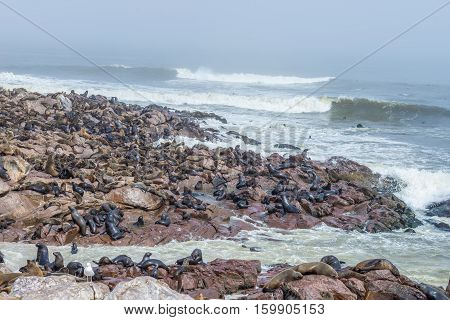 The Seal Colony At Cape Cross, On The Atlantic Coastline Of Namibia, Africa. Expansive View On The B