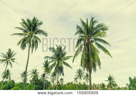 abstract coconut tree on retro filter sky - can use to display or montage on product
