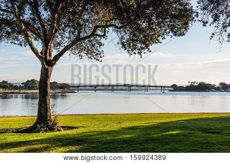 Tree in morning light at Ventura Cove Park on Mission Bay in San Diego, California.