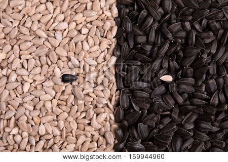 Sunflower seeds in different types. Black and white from seed