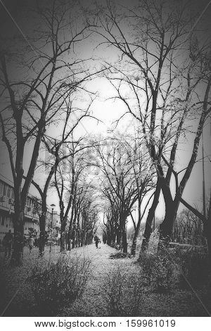 Very sad winter day without snow in the city park. Moody passage through the nature inside the metropolis.