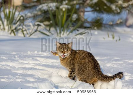 Cat out in the snow in winter season