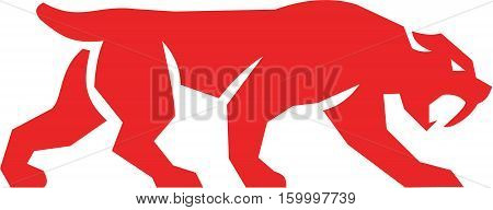 Illustration of a saber tooth tiger or sabre-tooth cat with long curved saber-shaped canine teeth of which the best known genera is Smilodon silhouette walking viewed from the side set on isolated white background done in retro style.