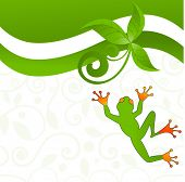 foto of tropical plants  - fun jumping frog  - JPG