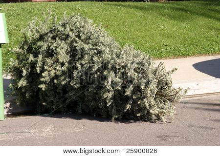 tossed out xmas tree in late January ready for the trash man