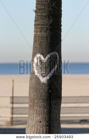 a heart painted on a palm tree trunk